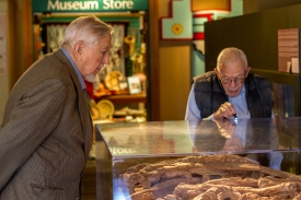 Art Jelinek (left) and Vance Haynes examine a mammoth on display in the Arizona State Museum lobby. (Photo by Kyle Mittan/University Communications)