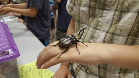A young Arizona Insect Festival participant meets a Hercules beetle.