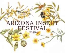 This year's Arizona Insect Festival on Oct. 20 will highlight the fact that more species of native bees live in and around Tucson than any other place in the world.