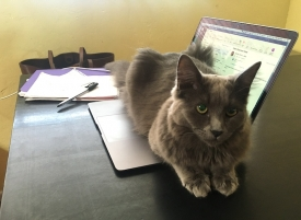 A pet cat will let you know when it's time to take a break by making it nearly impossible for you to work. (Photo by Pila Martinez/University Communications)