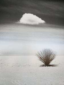 """Ruslan Rafikov, an assistant professor in the Department of Medicine, won Best of Show in 2019 for """"Small Talk,"""" taken at White Sands National Park in southern New Mexico."""