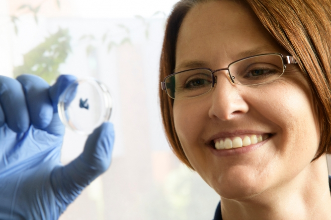 Professor Kirsten Limesand found an unlikely research niche studying salivary glands, and now helps head-and-neck cancer patients fight dry mouth caused by treatments. Limesand says she's also found a calling mentoring students. (Photo: Kris Hanning/UAHS BioCommunications)