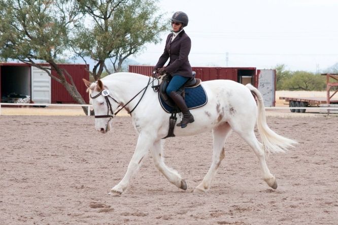 Pia Cuneo and Stella recently competed in dressage at the Pima County Fairgrounds. Her passion for horses has also influenced her scholarly work and teachings. (Photo by Stacy Pigott/University Communications)