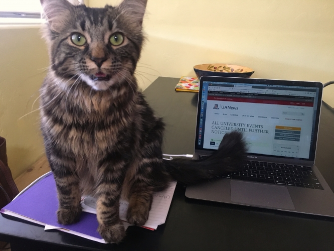 Some pets like to be very involved in work-from-home situations. (Photo by Pila Martinez/University Communications)