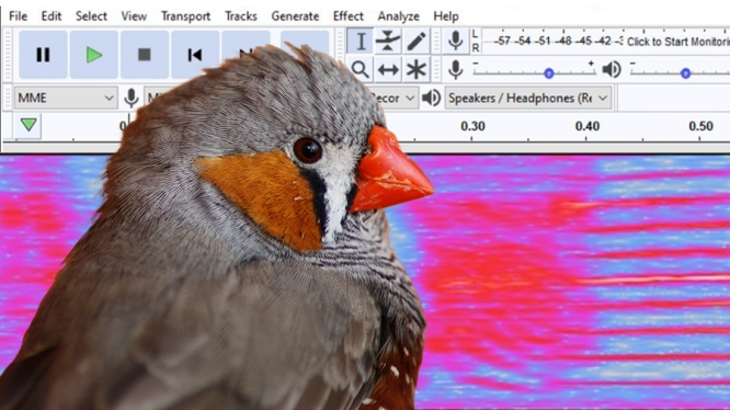 A University neuroscientist who studies the zebra finch songbird used ReDATA to archive data comparing birdsong and the human voice.