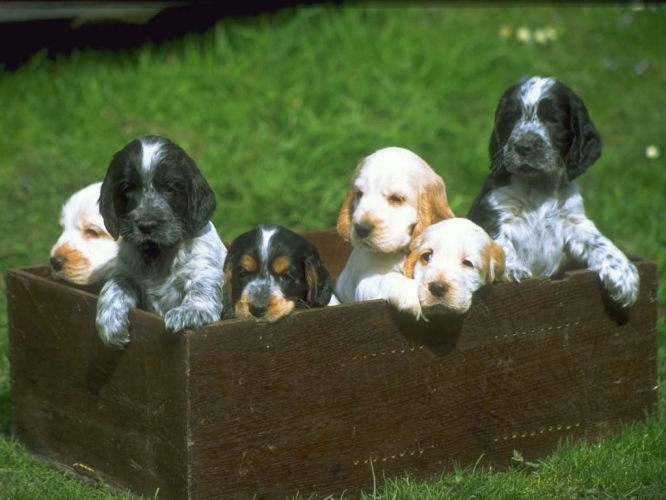 UA@Work is a great place to advertise items you want to sell or give away, like adorable puppies.