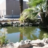 Koi pond near North Park Avenue and East Second Street